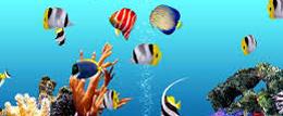 Aliyar Aquarium